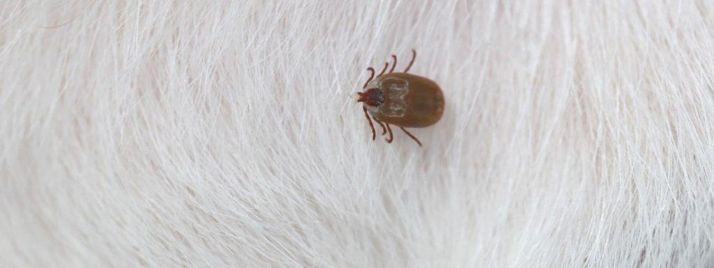 ticks, ticks new jersey, ticks nj, nj ticks, ticks monmouth county, ticks middlessex county, ticks ocean county, dog ticks, deer ticks, lyme disease