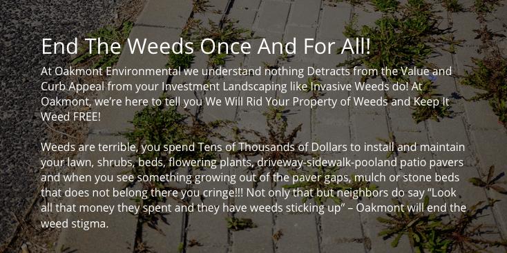 get rid of weeds, how to get rid of weeds, get rid of weeds nj, new jersey, get rid of weeds monmouth county, get rid of weeds middlesex county, get rid of weeds ocean county, lawn weeds, lawn weeds nj, lawn weeds monmouth county, lawn weeds middlesex county, lawn weeds ocean county