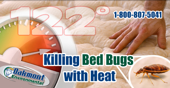 How To Get Rid Of Bed Bugs Nj Heat Is The Best Solution
